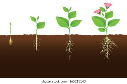 Plant that grows and flourishes