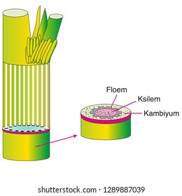 Plant Tissues, Parts of Plant, Meristem Tissue | Biology lesson