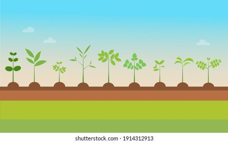 Plant Types grow with nature background.Vector illustration.Seedling green trees.Plants set on ground.Garden tree seedling