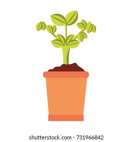 plant vector  illustration