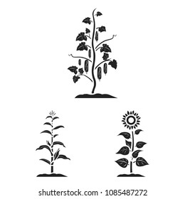Plant, vegetable black icons in set collection for design. Garden and harvest vector symbol stock web illustration.