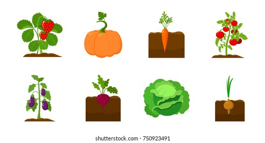 Plant, vegetable icons in set collection for design. Garden and harvest vector symbol stock  illustration.