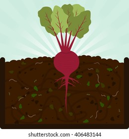 Planting beet. Composting process with organic matter, microorganisms and earthworms. Fallen leaves on the ground.