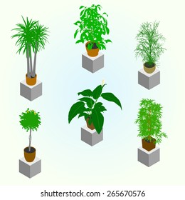 Planting of greenery for the isometric world interior. Set of few plants for room