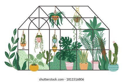 Planting greenhouse. Glass orangery, botanical garden greenhouse, flowers and potted plants home gardening isolated vector illustration. Plants hanging on ropes, growing greenery in pots