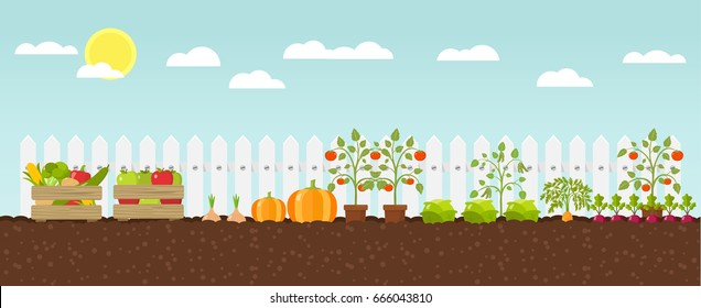 planting growing vegetables flat design vector graphic