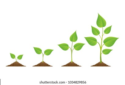 Planting. Plants grow isolated on white background or plant seed, growing and cultivation vector illustration