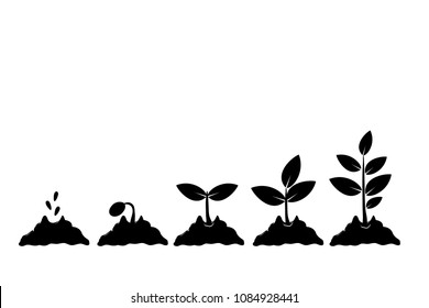 Planting seed sprout in ground. Infographic sequence grow sapling. Seedling gardening tree. Icon, flat isolated on white background. Vector illustration