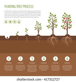 Planting tree process infographic. Apple tree growth stages. Steps of plant growth. Business concept. Flat design, vector illustration.