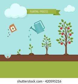 Planting tree process infographic. Flat design, vector illustration.