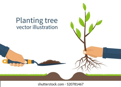 Planting tree, sapling with roots and garden spade in hand man. Process planting concept, infographic. Gardening, agriculture, caring for environment. Vector illustration flat style design.