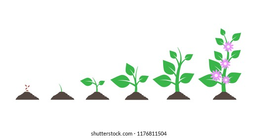 Planting tree. Seedling gardening plant. Seeds sprout in ground isolated on white background. Vector illustration. Eps 10.