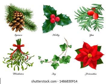 Plants, Christmas decorations. Spruce, holly, yew, mistletoe, ivy, poinsettia. 3d realistic vector set
