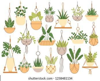 Plants in hanging pots. Decorative macrame handmade hangers for flower pot, hang indoor plants. Planting flowers, plantar pots garden decoration flat isolated vector icons set