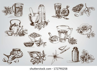 plants and herbs in folk medicine. set of vector sketches