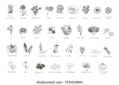 Plants, herbs, vegetables, flowers vector illustrations set