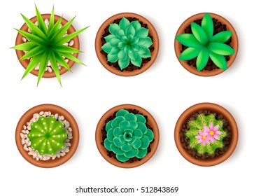 Plants icon set top view with pets flowers cacti in a pot vector illustration
