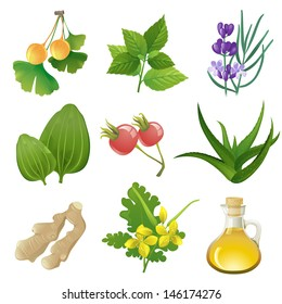 Plants icons for herbal medicine