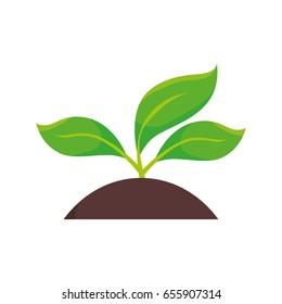 plants land ecology