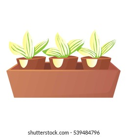 Plants in pots icon. Cartoon illustration of plants in pots vector icon for web design