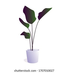 plants potted in container for use indoors as houseplant and decoration on white background. illustration plant on pot with gradient color.
