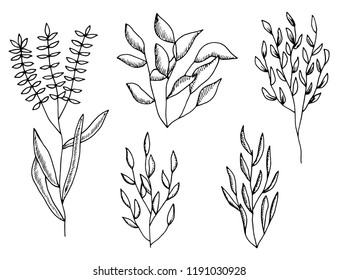 plants set of twigs and leaves. bushes sketches isolated on white background.