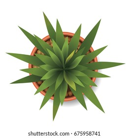 plants top view vector illustration