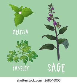 Plants vector collection. Herbs for kitchen and health illustrations