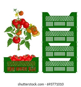 Plastic boxes and tomatoes. Vector illustration