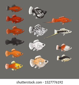 Platy and Molly Fish Vector Illustration