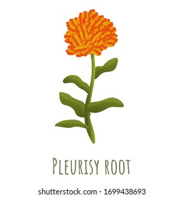 Pleurisy root icon. Cartoon of pleurisy root vector icon for web design isolated on white background