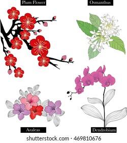Plum blossom, Osman thus,  Azaleas