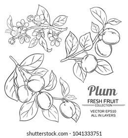 plum branches set