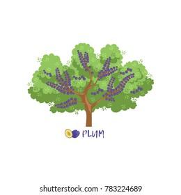 Plum garden fruit tree with name vector Illustration