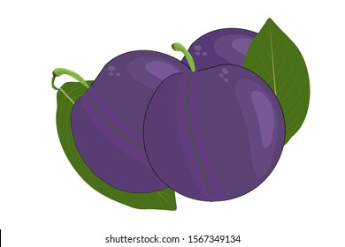 Plum isolated on white background. Plum fruit and leaf. Simple cartoon flat style organic fruit. Ripe purple plums for icon for jam or juice label, gardening farm sign, print, poster, menu. Vector EPS