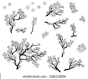 Plum plant vector. Free hand Sakura flower vector set, Beautiful line art Peach blossom isolate on white background