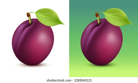 Plum vector illustration on white and green background. Close up fruit for garden web site or vegetarian menu.