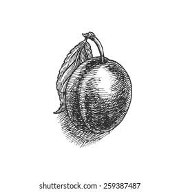 plum, vintage fruit