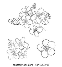 Plumeria or frangipani flower illustration drawing set with hand drawn line art style for coloring