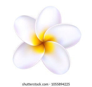Plumeria tropical flower. Relistic 3d frangipani white yellow blossom blooming. Exotic floral illustration. Spa, summer holiday paradise hawaii resort, beach party symbol. Isolated vector illustration