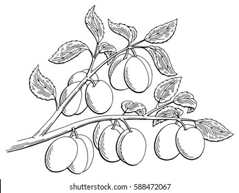 Plums graphic tree black white isolated sketch illustration vector