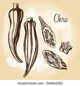 Pods and sliced pieces of okra, hand-drawn vector illutration