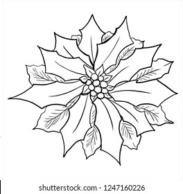 Poinsettia flower vector , line drawing