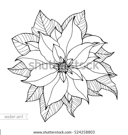 Poinsettia Isolated Christmas Flower Vintage Vector Stock