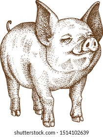 Pointillism Drawing Vektor of Pig