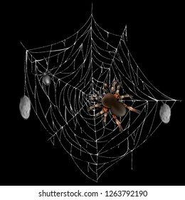 Poisonous spiders on web lace with hunted and wrapped preys 3d realistic vector isolated on black background. Tarantula and black widow spiders illustration. Dangerous for human insects or arthropods