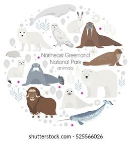 Polar animals. Vector circle animal set. White polar bear, narwhal, whale, musk ox, seal, walrus, arctic fox, ermine, rabbit, arctic hare