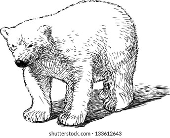 Polar Bear Cub Isolated Stock Illustrations Images