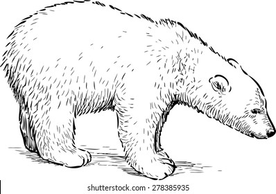 Polar Bear Drawing Images Stock Photos Vectors Shutterstock