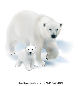 Polar bear and cub.  Hand drawn vector illustration of a polar bear mother with her offspring on white background.